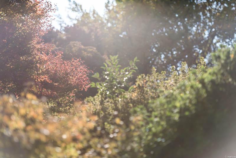 光りあふれる秋のある日