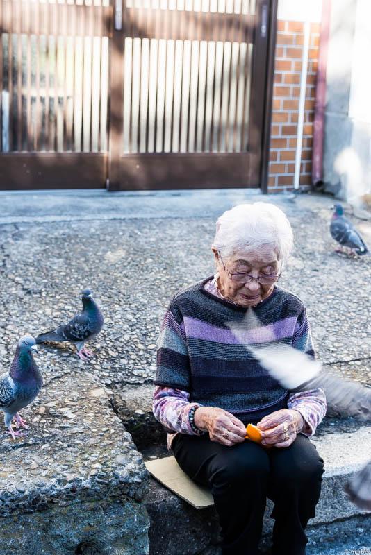 鳩を手懐けるお婆さん