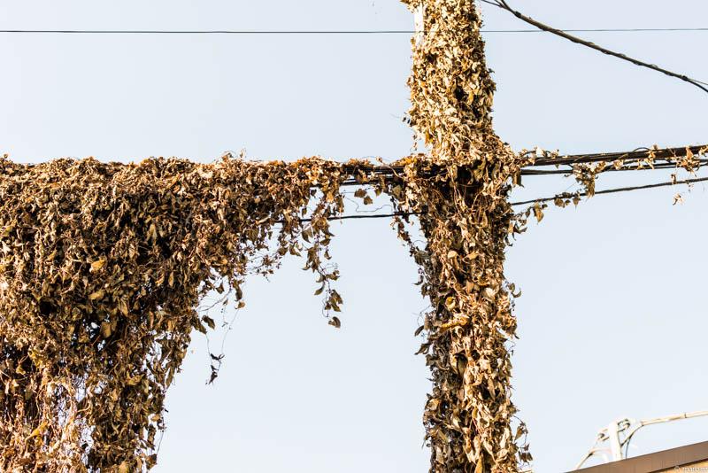 枯葉に包まれた電柱