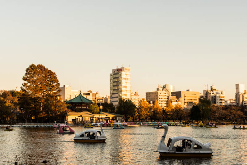 上野公園 池