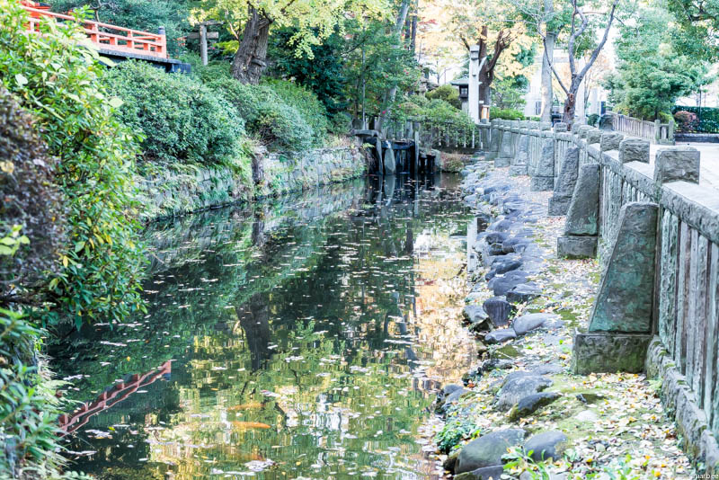 根津神社の池