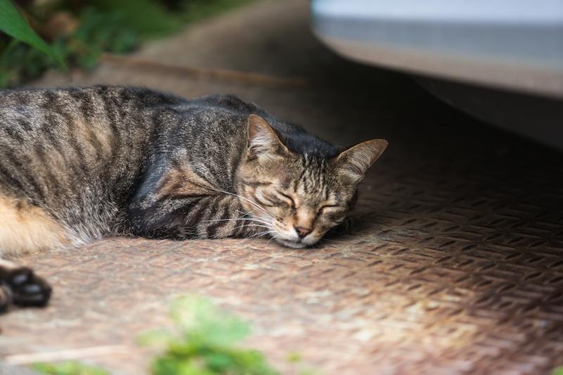 猫の一休み