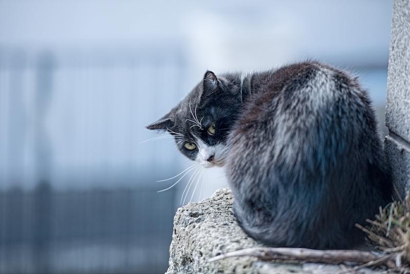 後ろを気にする猫