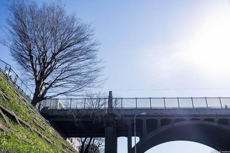 響橋と桜の木