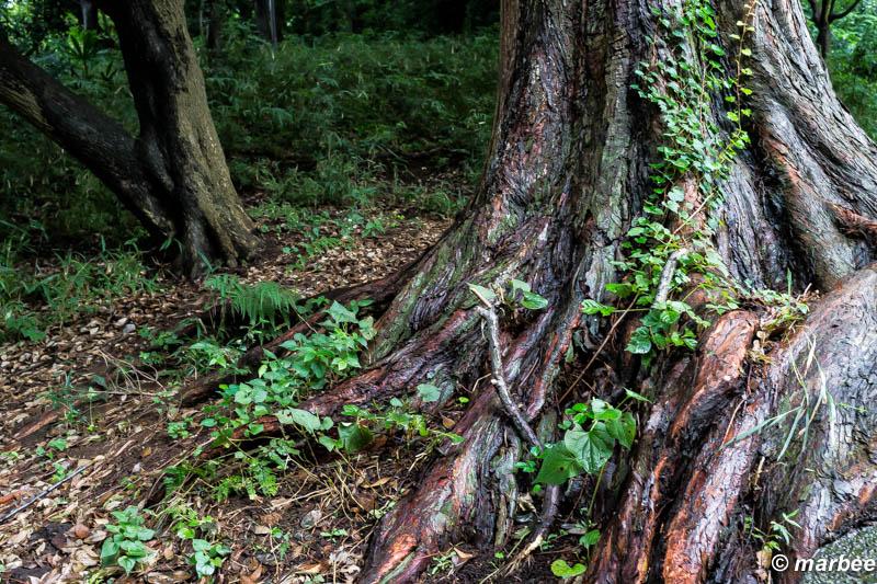 朝露に濡れた木