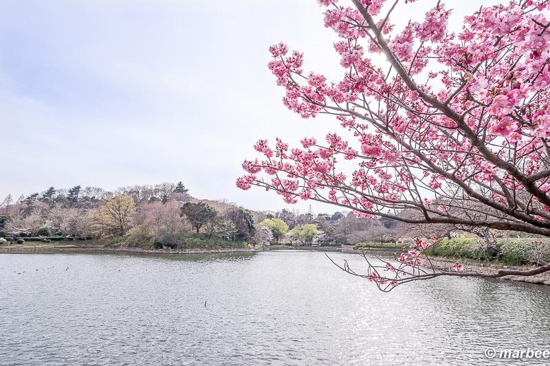 写真 ある春の1日 201602日本で最も美しく過ごし易い季節
