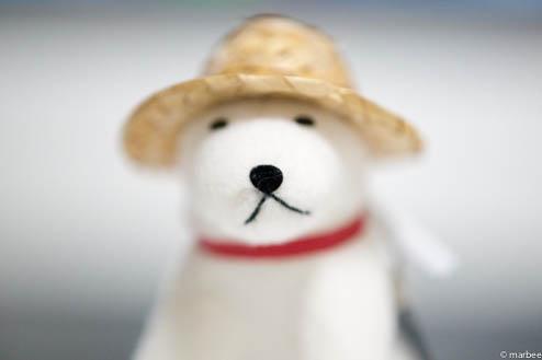 お父さん犬ISO800