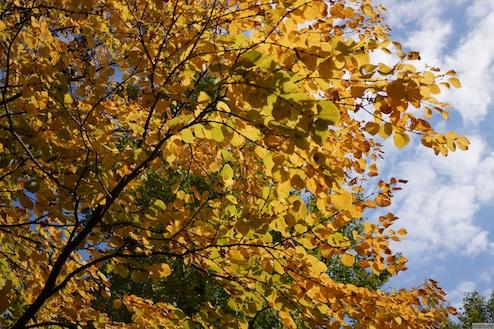 色づいた木