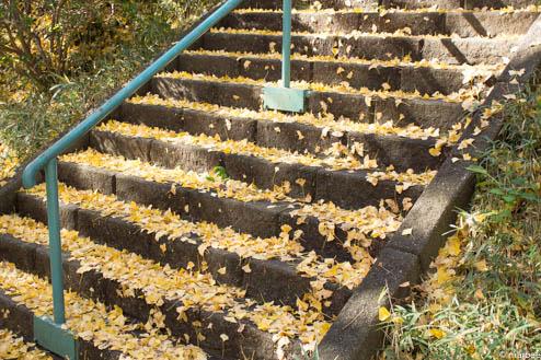 銀杏の階段