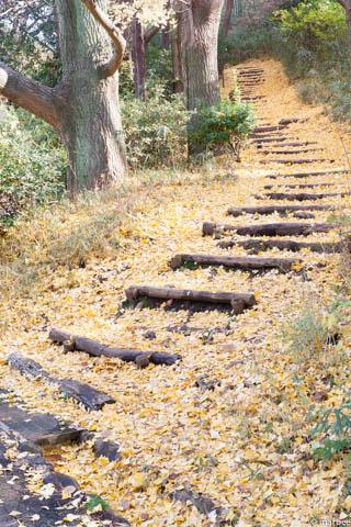 銀杏の落ち葉に覆われた階段
