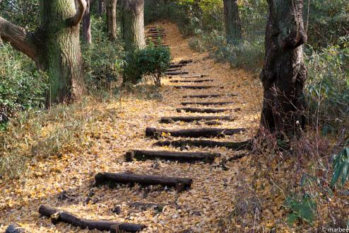 銀杏の落ち葉で覆われた階段