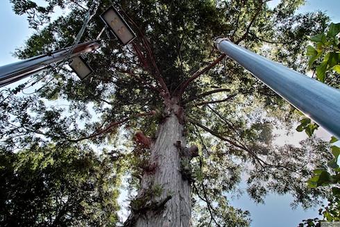 広角で見上げる木