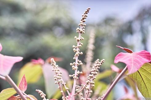 何かの芽?