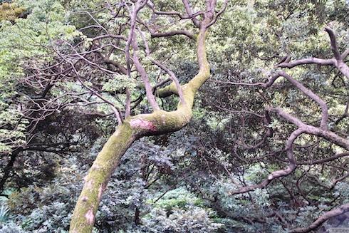 うねった木