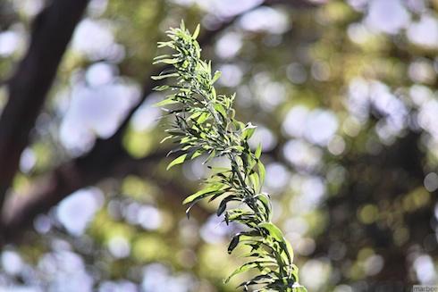 野毛山公園の植物