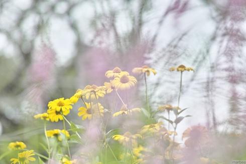 紫のベールを纏った黄色い花