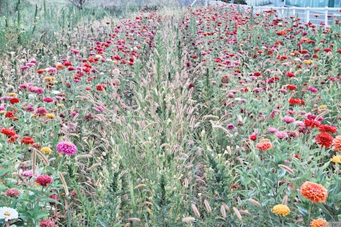 空き地に咲いた花