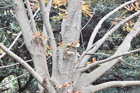 色づき始めた木
