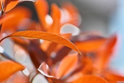 色づいた葉