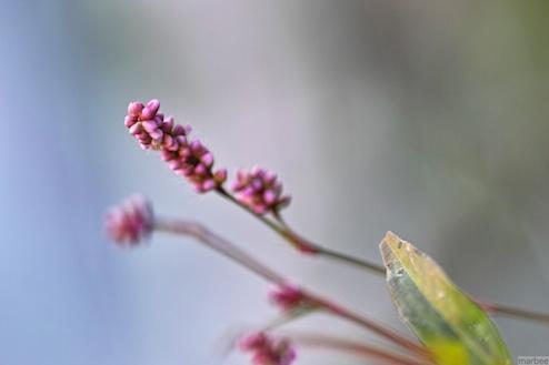 小さくてピンク色な花