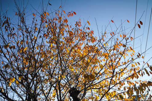 枯れ木と空